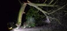 Flinke boom in Gouda breekt doormidden door storm