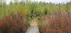 Groenalliantie maakt recreatiegebieden aantrekkelijker voor bezoekers