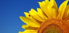 Lentefair Goudse Hout: 'Vier het Voorjaar'