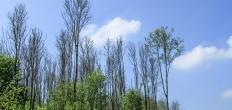 Aanpak essentaksterfte in recreatiegebieden Groene Hart