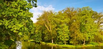 IVN zoekt gemeenten voor 100 Tiny Forests