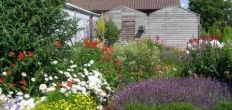 Inloopmiddag Heempad over zomerplanten