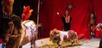 Za. 21-7: Circus Bossle in Schoonhoven