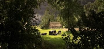 Woe. 5-9: Landschapsfoto's van Saskia Boelsums in Bezoekerscentrum Nieuwkoopse Plassen