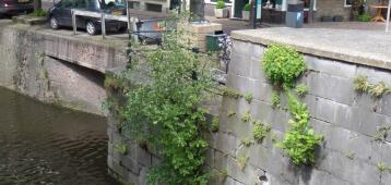 Zo. 30-9: Excursie stadsplanten door het centrum van Gouda