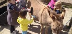 Workshop Dierverzorging op de kinderboerderij