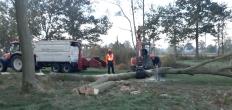 Zaagwerkzaamheden in recreatiegebied Twaalfmorgen